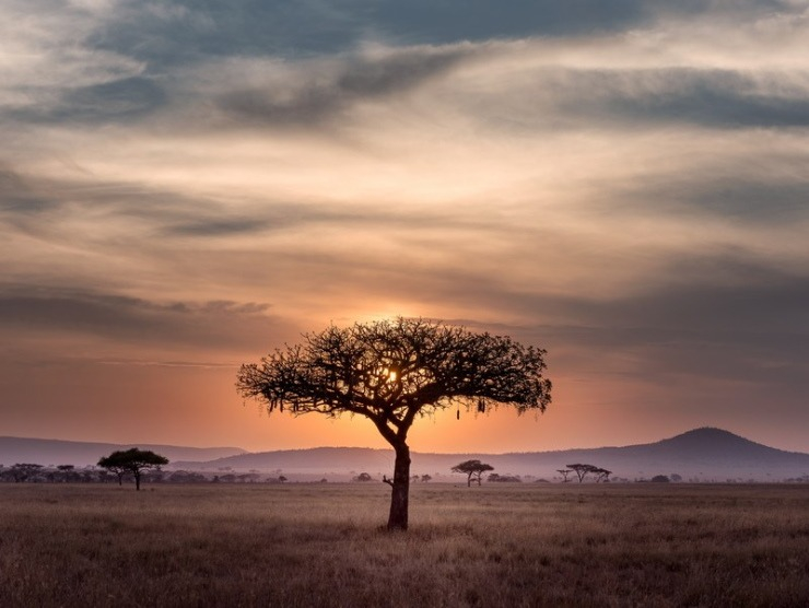 South Africa Tree Sunset